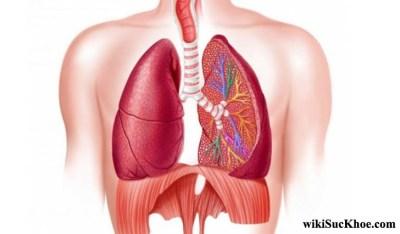 Bệnh phổi kẽ: Khái niệm, nguyên nhân, biểu hiện, điều trị, cách phòng ngừa