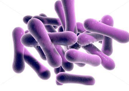 Vi khuẩn bạch hầu gây nên những nguy hiểm cho sức khỏe