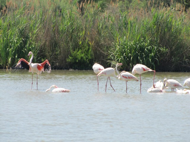 Bird Sanctuary, The Camargue, France