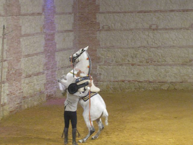 Spanish Riding School, Cordoba