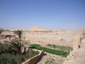 Palmyra5