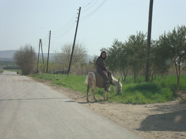Lady on donkey on the road to Palmyra, Syria