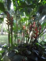 Jardim Botânico,Rio de Janeiro
