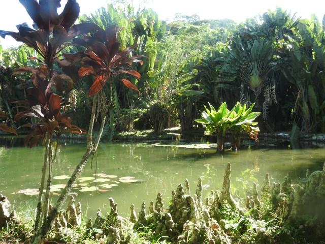 Jardim Botânico,Rio de Janeiro, Brazil
