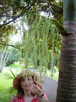 Sir Seewoosagur Ramgoolam Botanical Garden, Mauritius