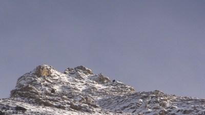 Alpensteenbokken in de verte...