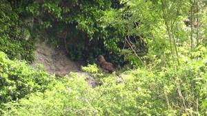 Jonge oehoe in nest