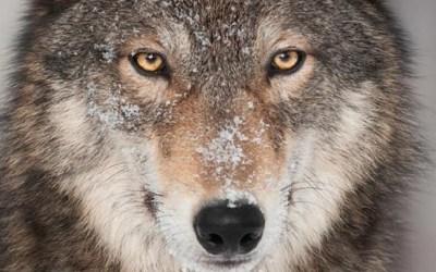 Wolf Naya: Van Duitsland tot Limburg