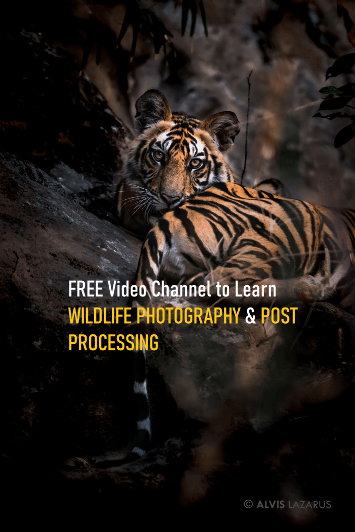 Learn Wildlife Photography Post Processing