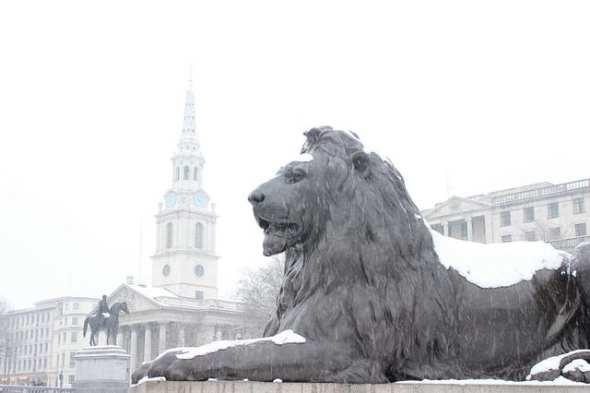 Lion statue in Trafalgar Square