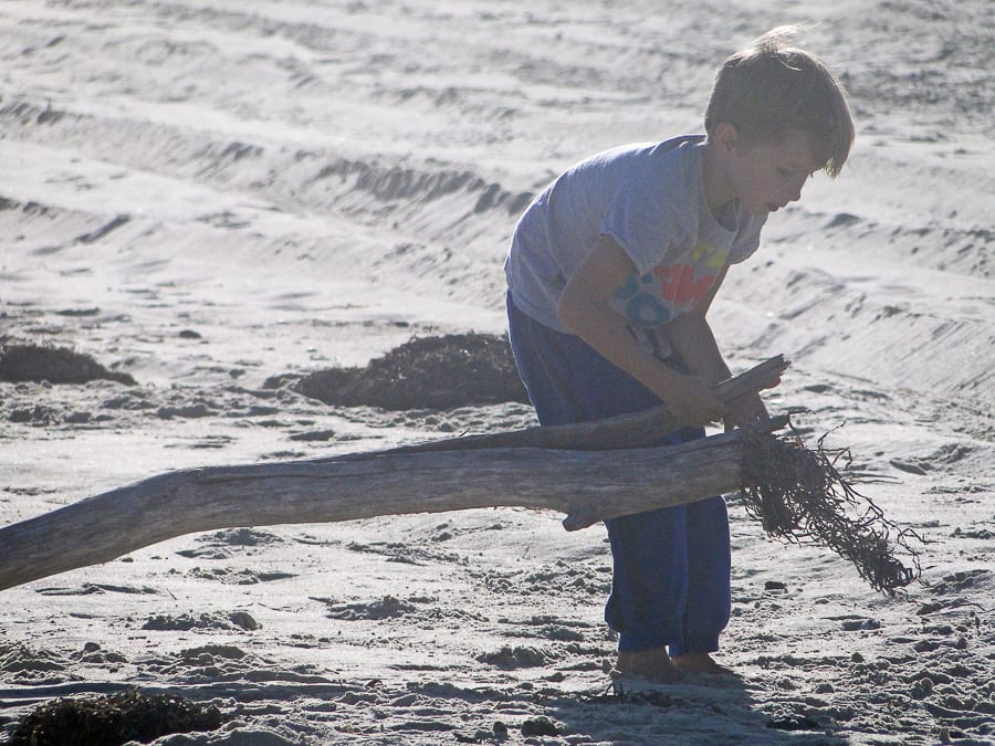 beach walk with kids collecting driftwood