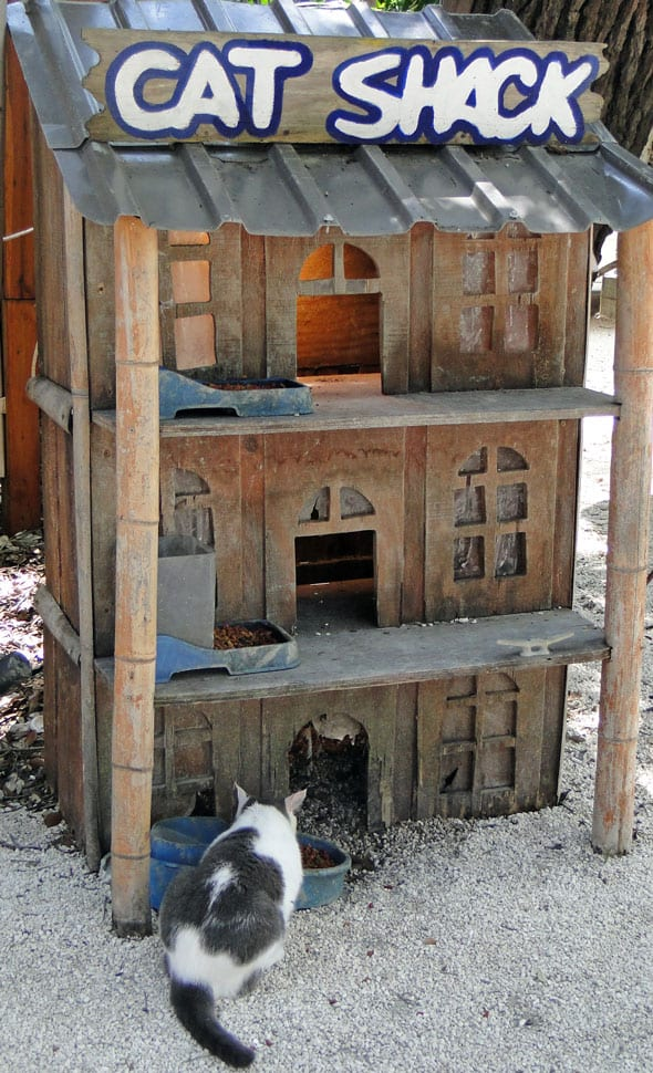 cat shack