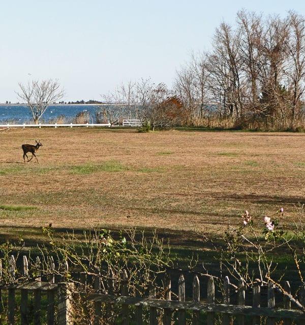 water view deer field