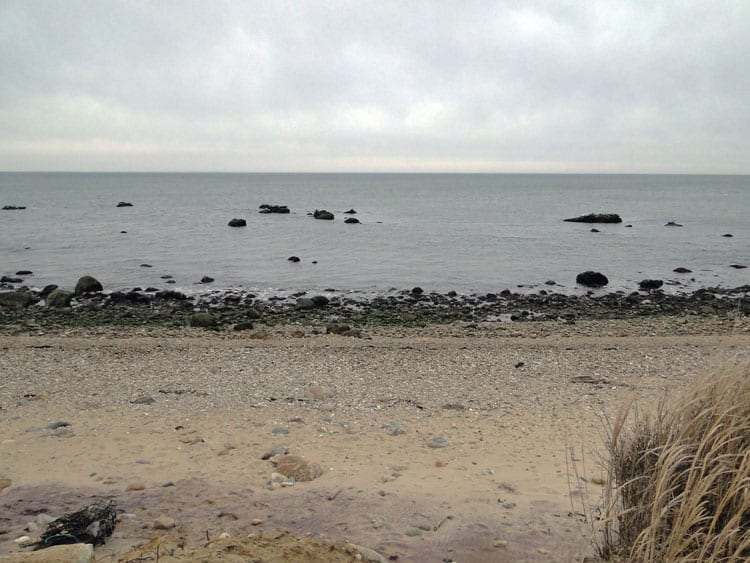 wide shot seal haulout area