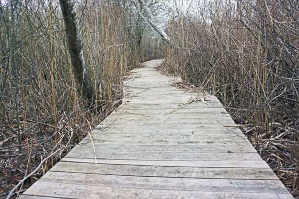 boardwalk sagg swamp