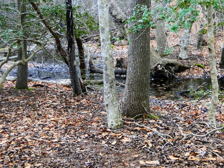 Seal Haul Montauk swamp in woods