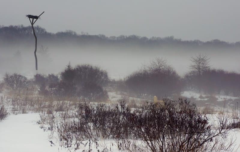 Hamptons NY sofo nature preserve mist