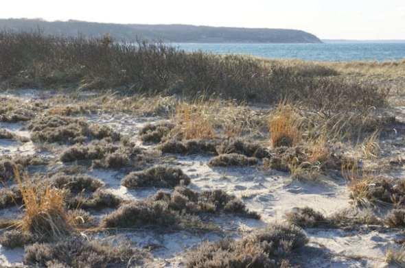 dune coastline nature preserve