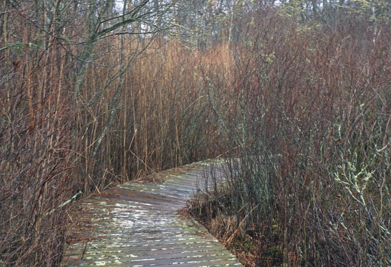 sagg swamp boardwalk