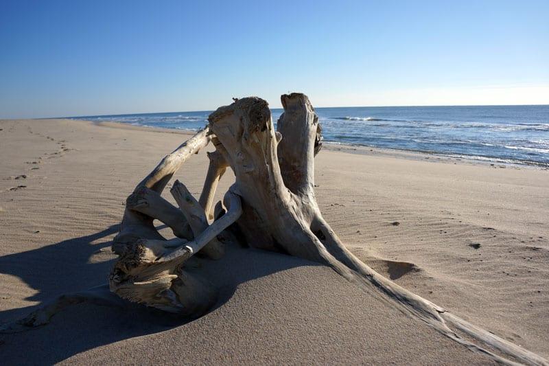 driftwood on Georgica beach fall