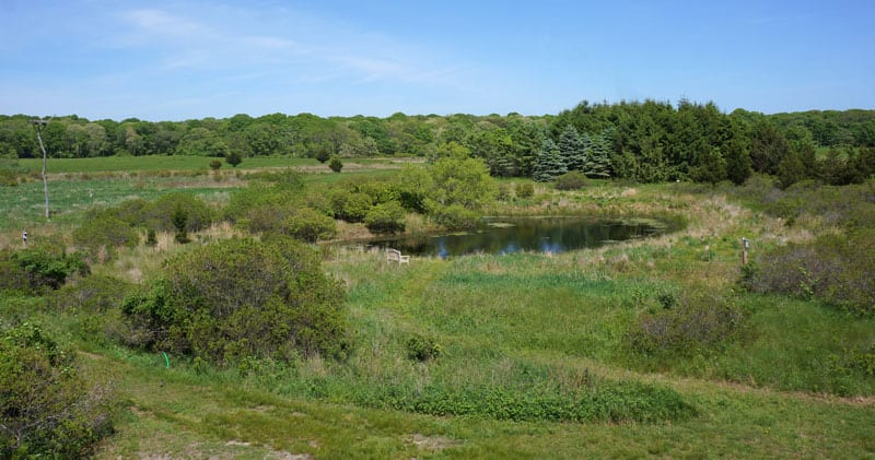 Spring SOFO pond