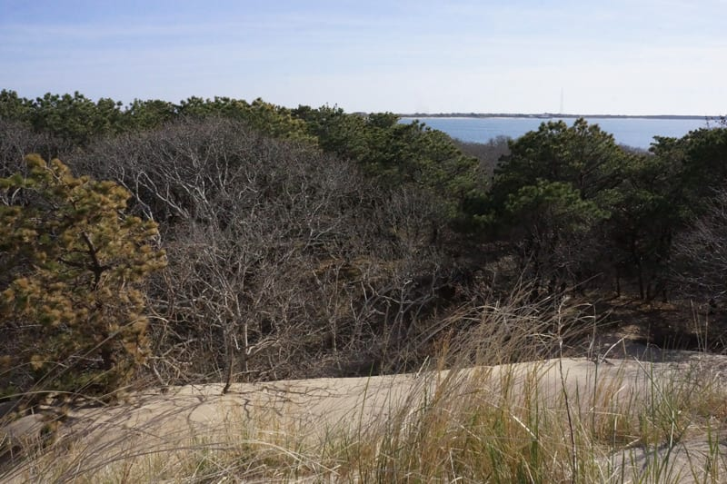 Sand Forest Bay at The Walking Dunes