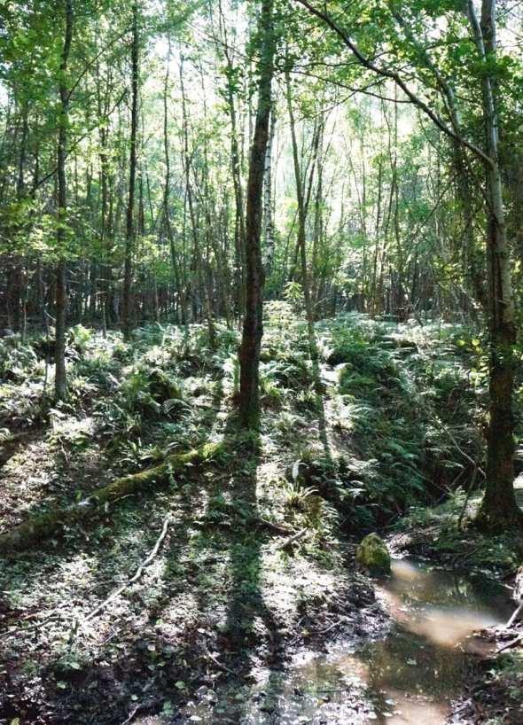 sunlight shining through woods