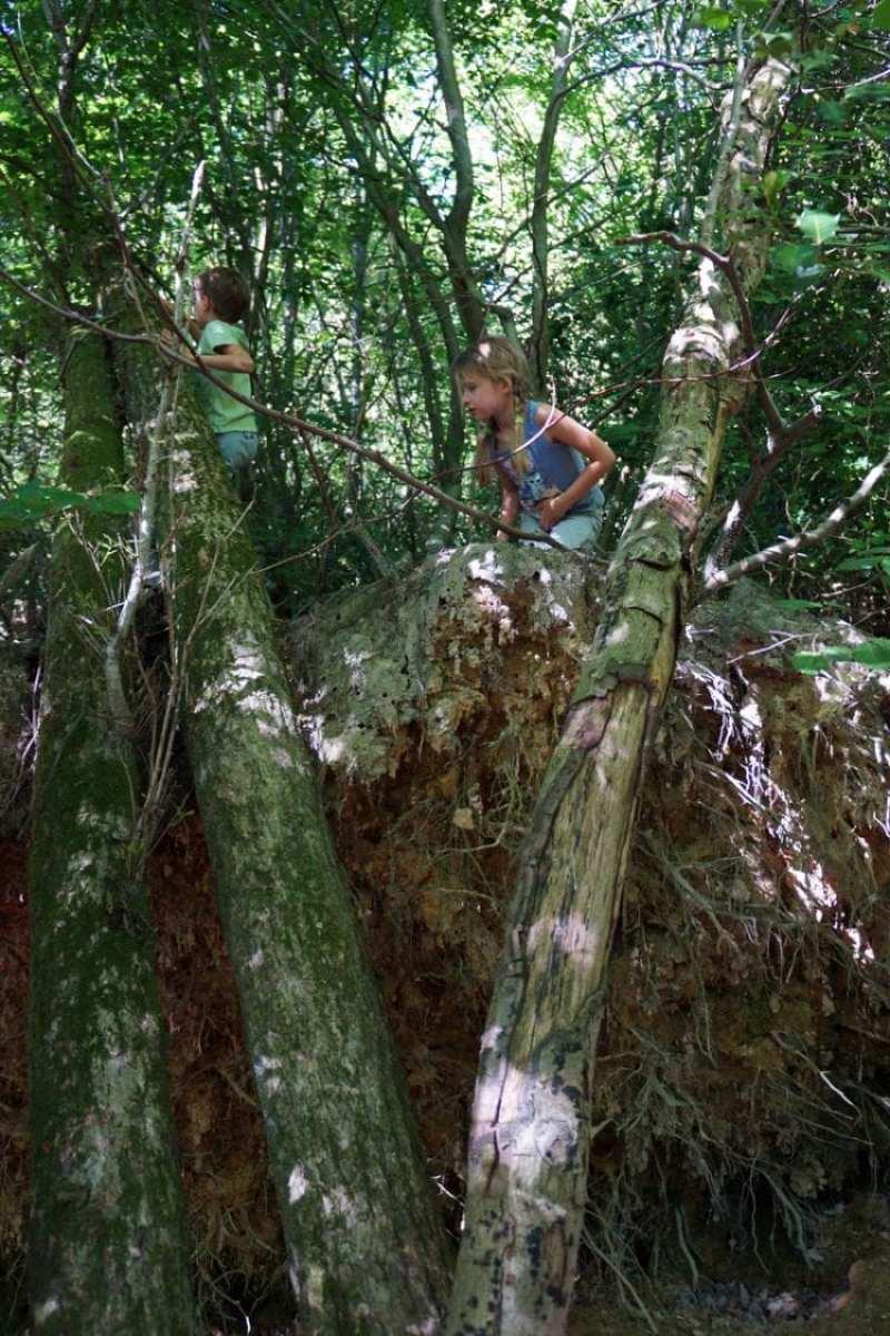 Climbing on fallen trees