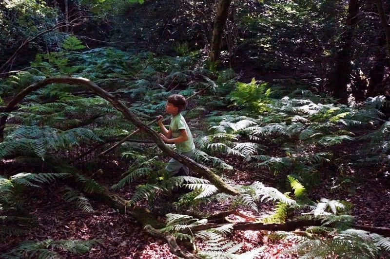 Walking among ferns