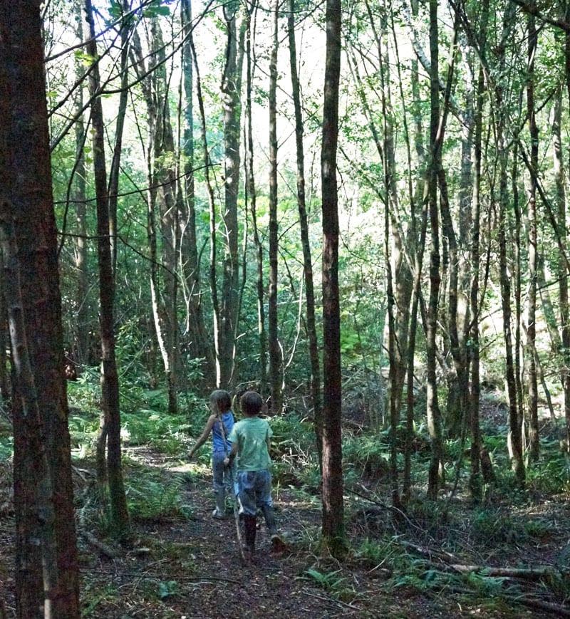 Walking through English woods