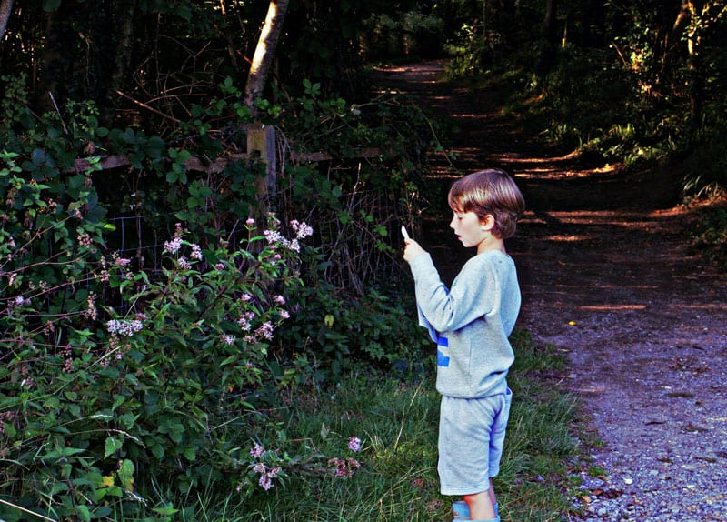 Finding Hemp Agrinomy