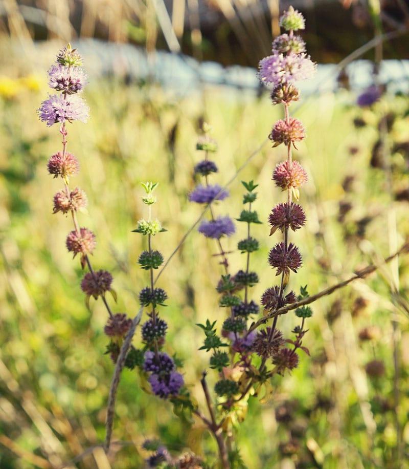 Wildflowers at Ardingly Reservoir