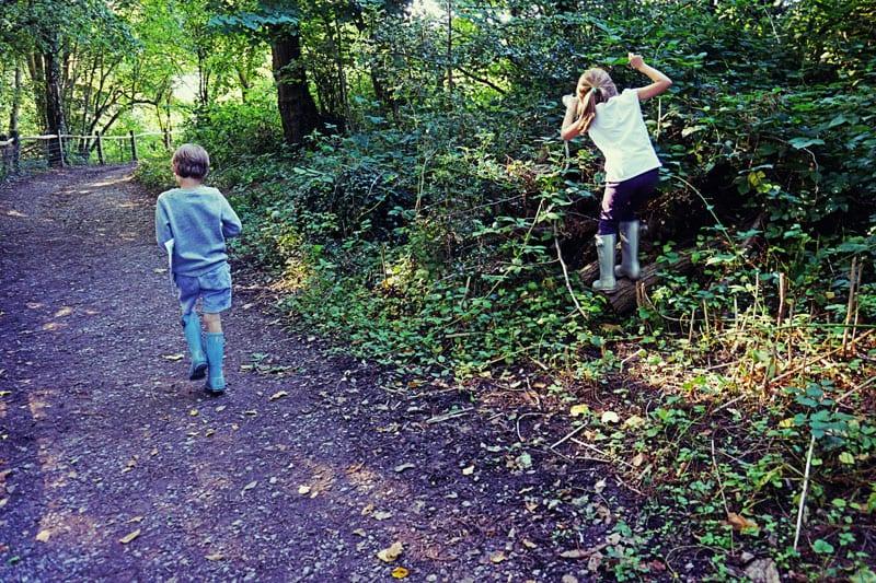 Blackberry picking Ardingly Reservoir Trail