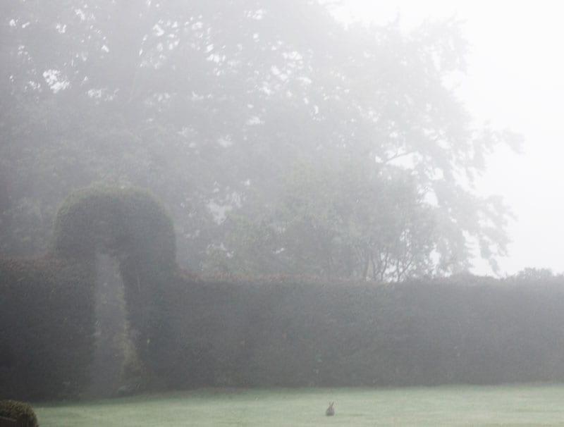 rabbit on lawn in mist