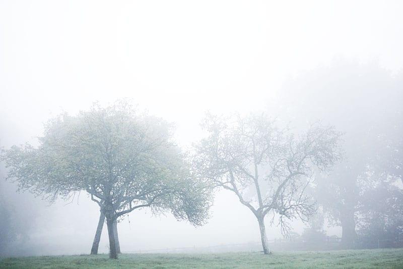 trees in autumn mist