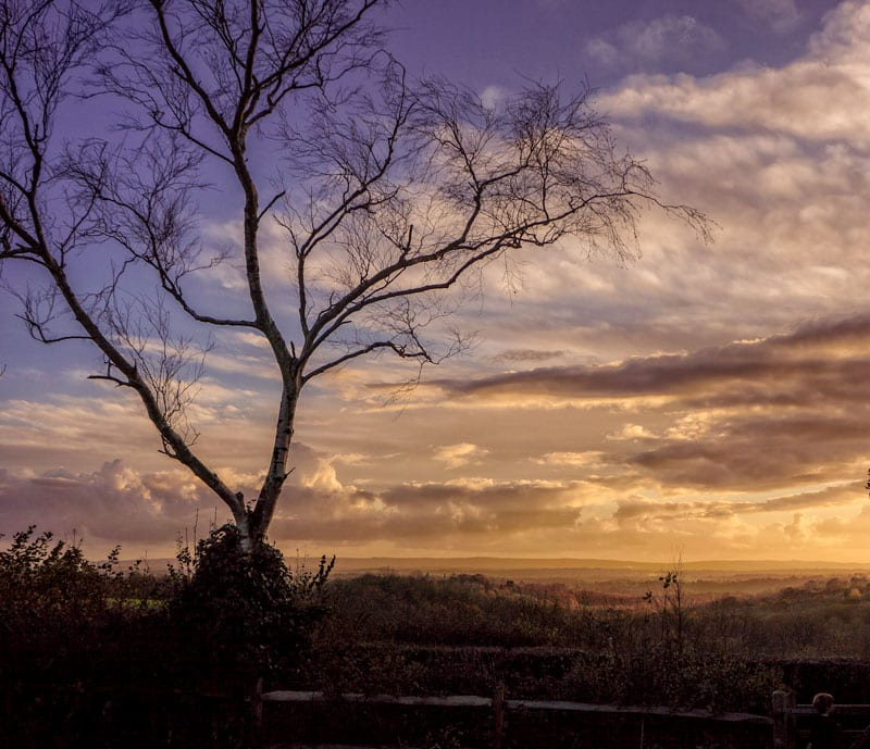 sunset tree landscape sussex