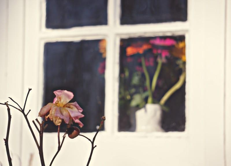 rose flowers behind window