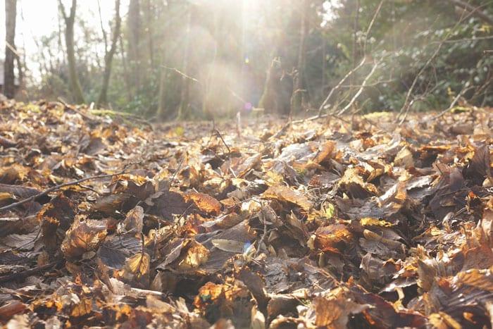 sun rays on dead leaves