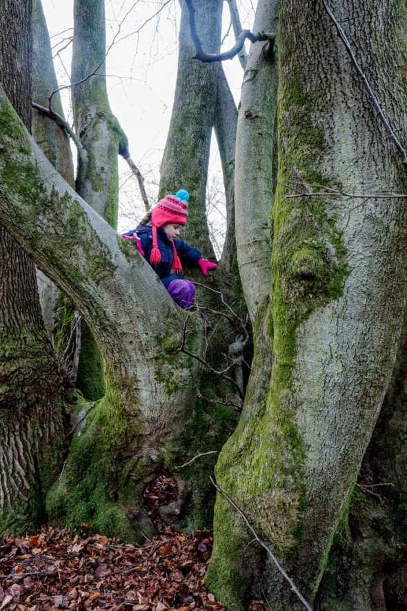 climbing on beech trees