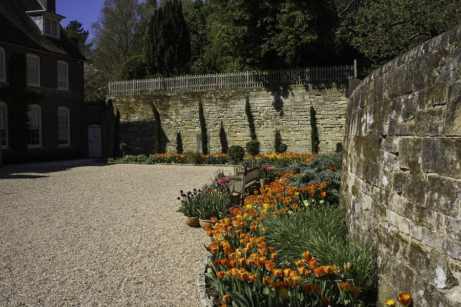 Tulips in Standen front courtyard