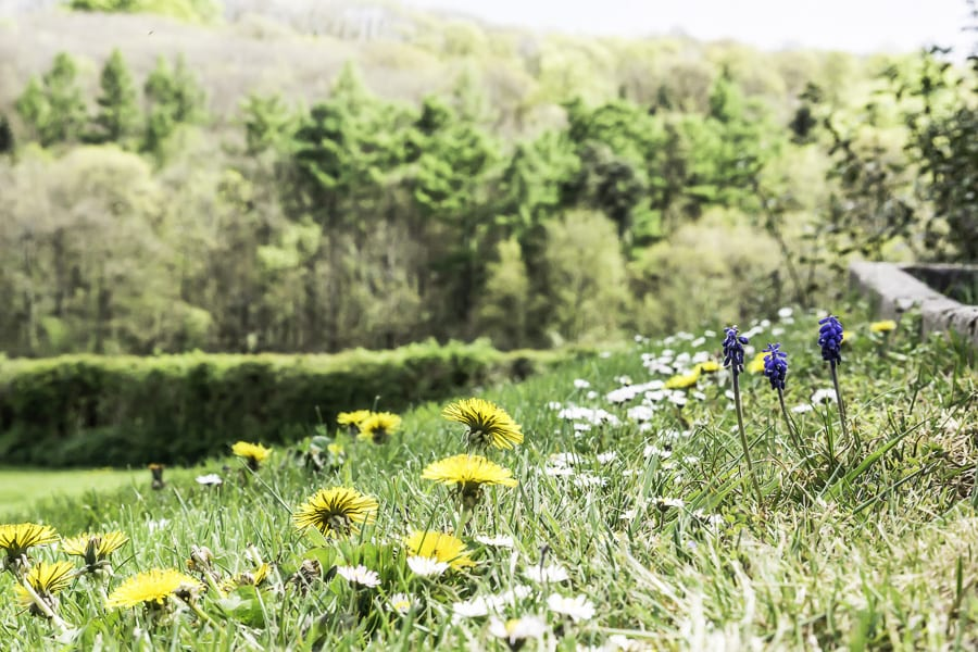 Dandelions, daisies and hyacinths