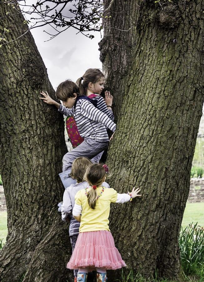 Climbing tree at RHS Wisley