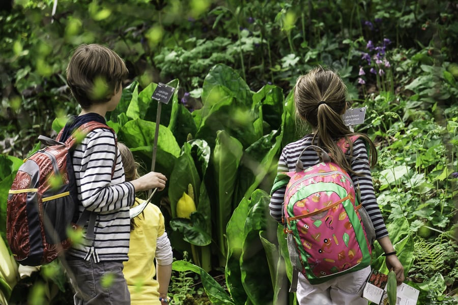 Western skunk cabbage and kids at RHS Wisley