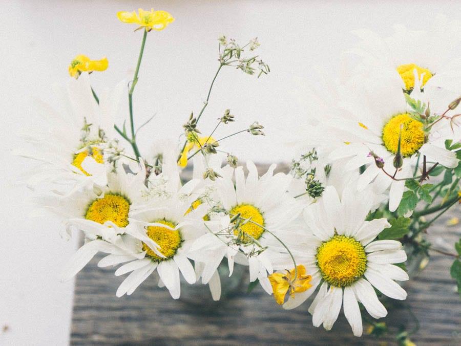 daisies in bottles