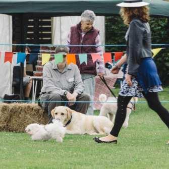 Pet dog show