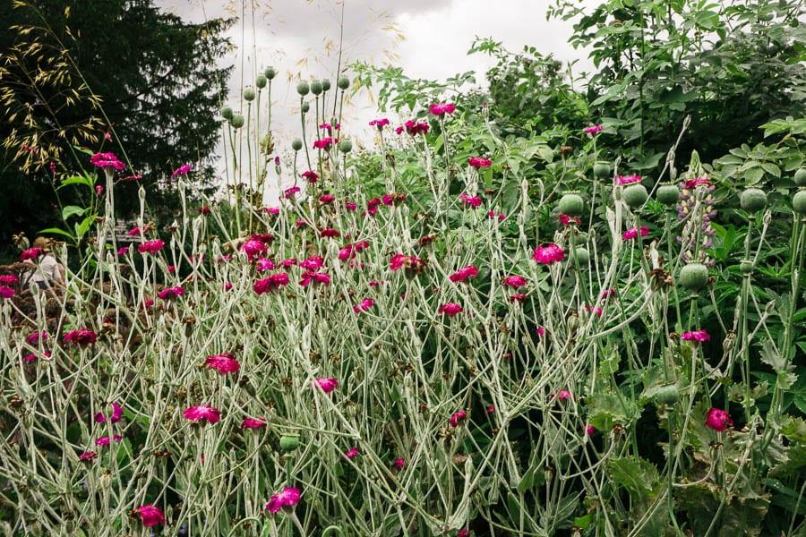 Pink flowers Gravetye Manor