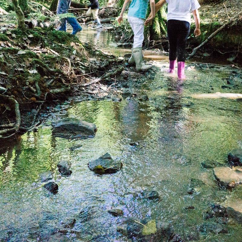 Children exploring woods