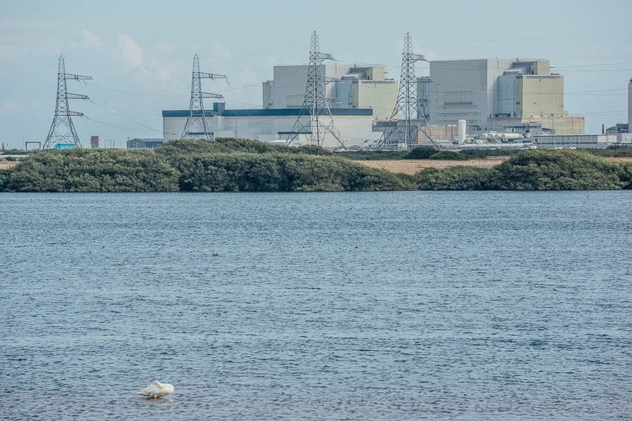 Swan and power station RSPB Dungeness