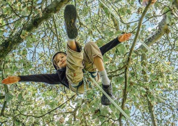 Theo recreational tree climbing