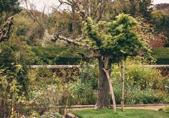Groombridge Place ancient tree